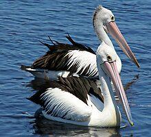 Two Birds by Jason Adams