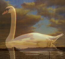 Dreamland - White swan collage by NicoleBPhotos