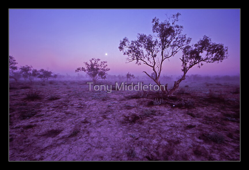 outback dawn I. by Tony Middleton