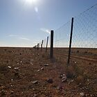 The Dog Fence by pmitchell