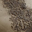 Beach harvest by Duncan Waldron