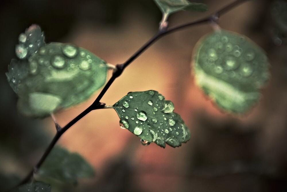 Drops and Leaves by John Roshka