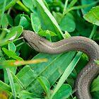 32417 garden snake by pcfyi