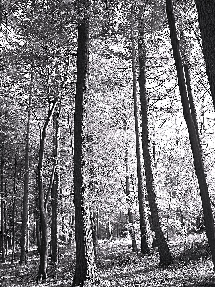 Black & White Wood by forestphotos