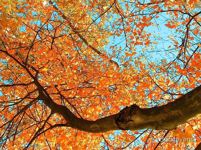 Falls Colors by BCStevens