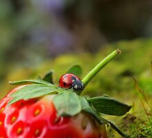 Ladybird on Strawberry by DollyDoLittle