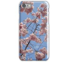 Sakura in Kungsträdgårdgården iPhone Case/Skin