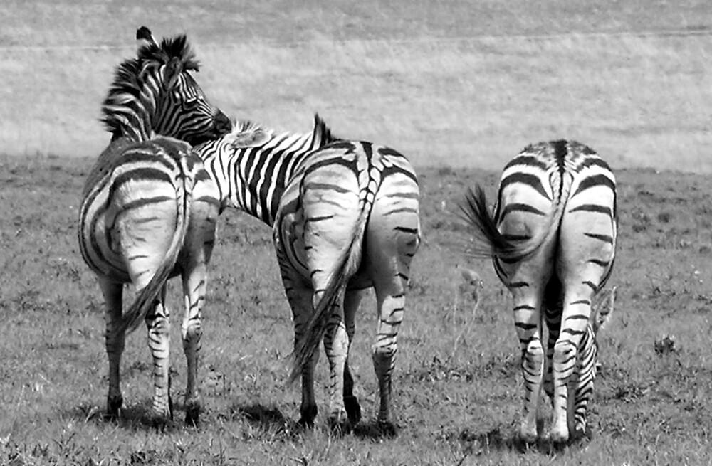 Playful Zebra   by Louw Agenbag