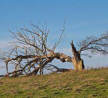 Fallen Majesty by John Thurgood