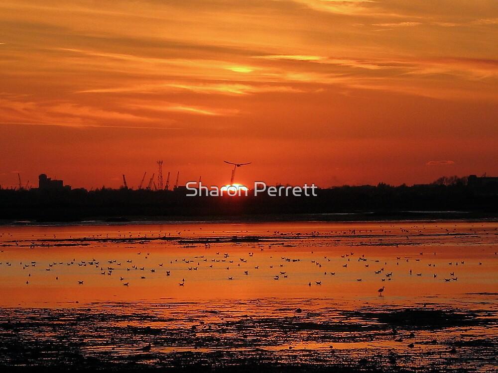 Red Sunset by Sharon Perrett
