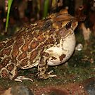 Common Toad by Teresa Zieba