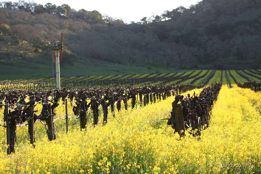 Mustard Galore by winecountry