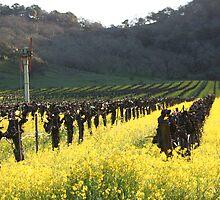 Mustard Galore by winecountry