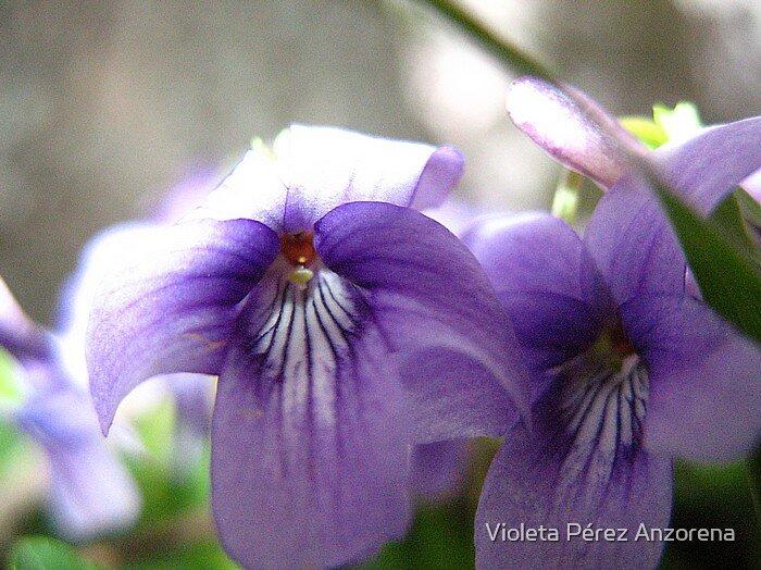 Violet by Violeta Pérez Anzorena