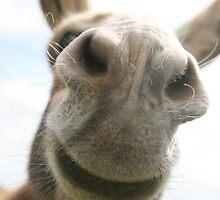 Donkey by Tokay