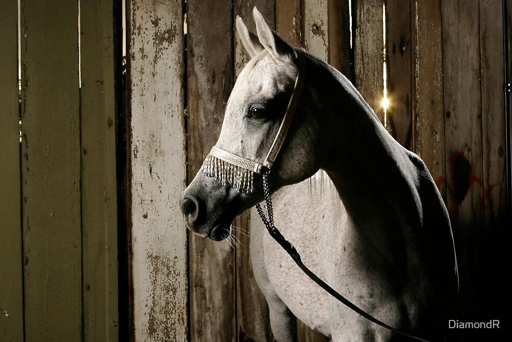 Nefisa in the Barn by DiamondR