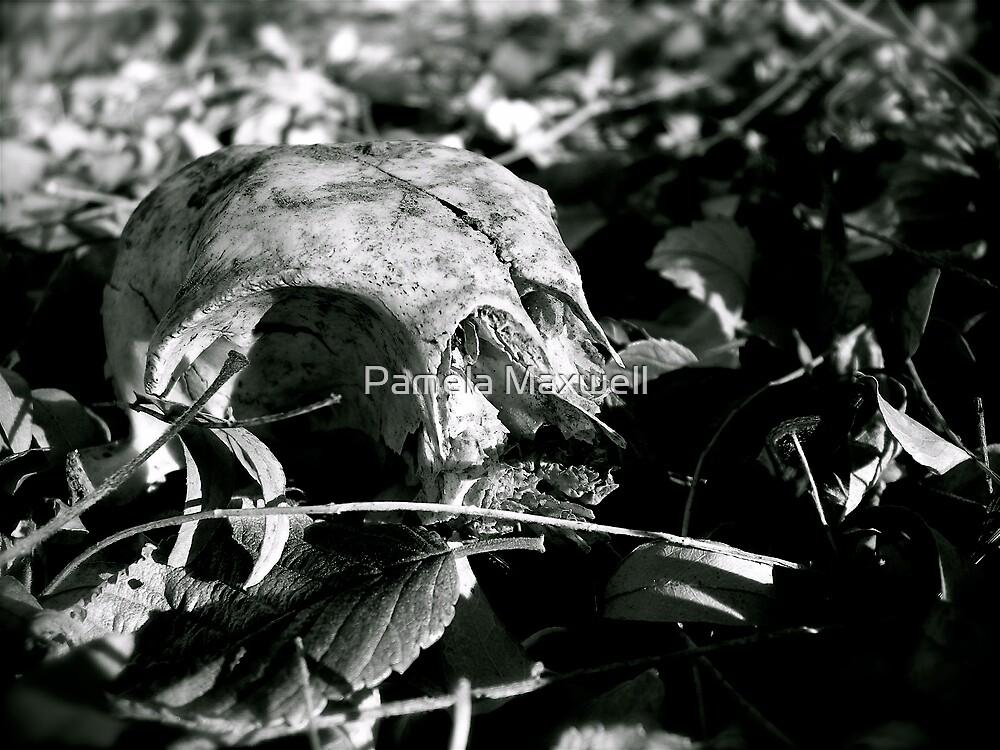 Animal Skull by Pamela Maxwell