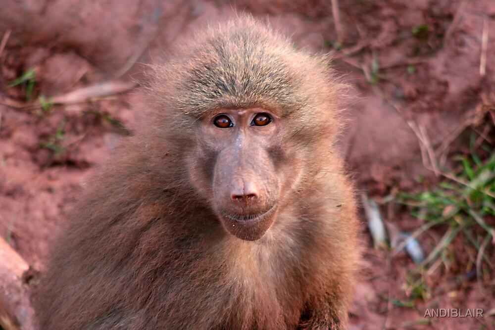 BABOON by ANDIBLAIR