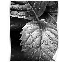Hydrangea raindrops III Poster
