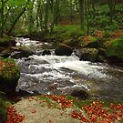 Fowey River, nr. Golitha Falls, Cornwall by Mark Wilson