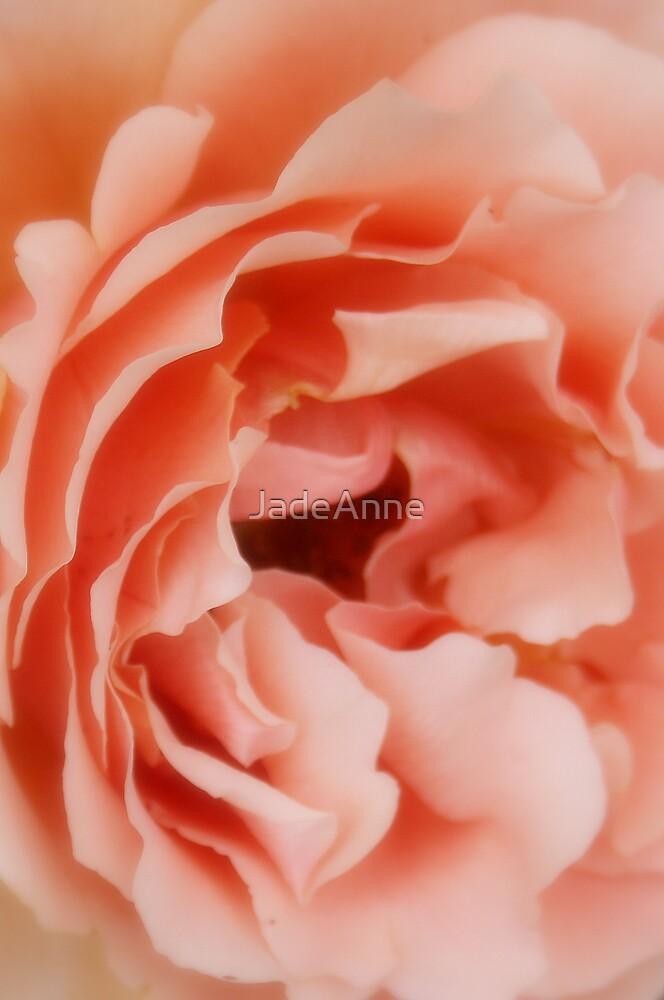 Soft Petals by JadeAnne