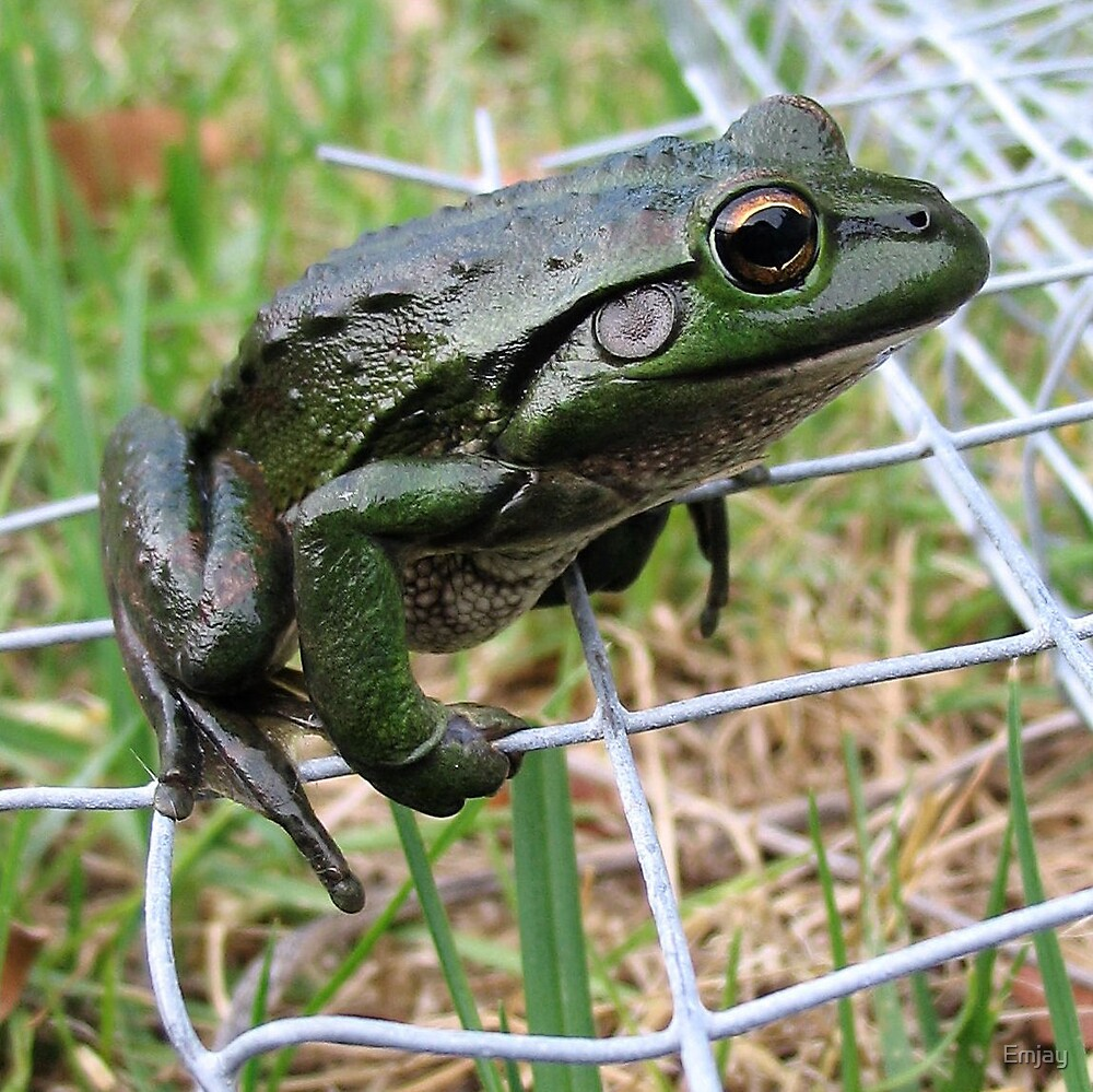 Frog on a Wire by Emjay