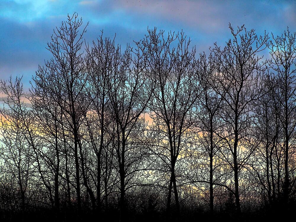 Tree Silhouettes by Gene Cyr