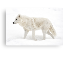 Winter Wolf - Walking Winter Wonderland Canvas Print