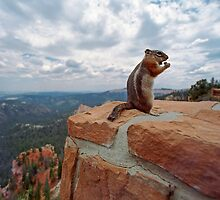 Bryce Chipmunk by Mark Ramstead