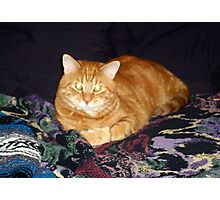 Glowing Eyes Kitty Photographic Print