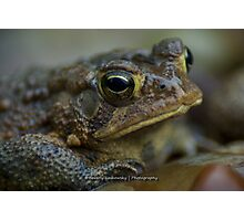 Toad in the Rain Photographic Print