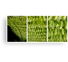 Scale4-SilverFern Canvas Print