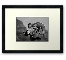 """""""Ram Tough"""" Framed Print"""
