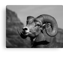 """""""Ram Tough"""" Canvas Print"""