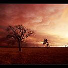 under the apocolypse - Victorian bushfires 2006 by Tony Middleton
