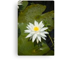 White Lilly Canvas Print