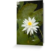 White Lilly Greeting Card