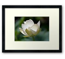 Backlit Lotus Framed Print