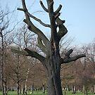 Wisdom tree by mik013