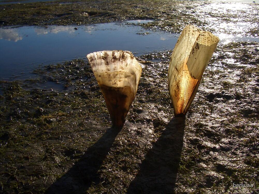 Shells in the mud by benwaa
