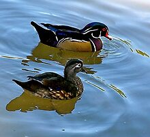 Wood Ducks by Nancy Richard
