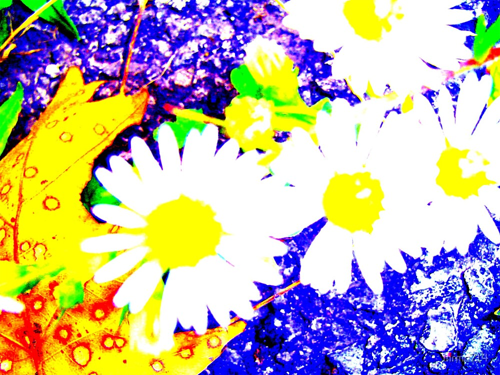colored daisies by mrmc714