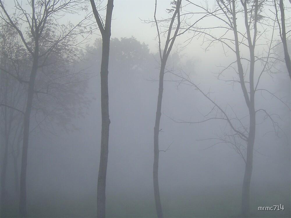 misty wood by mrmc714