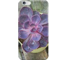 Purple Echeveria iPhone Case/Skin
