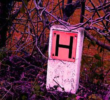 H is for.... by joconti