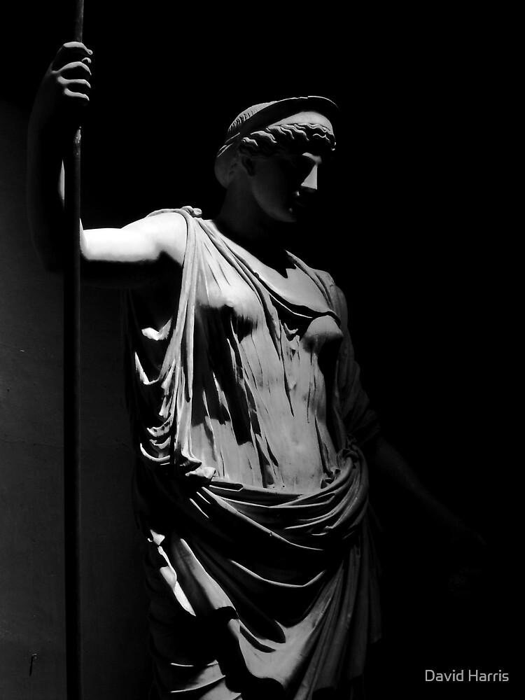 Shady Lady by David Harris