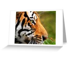 Panthera Tigris Greeting Card