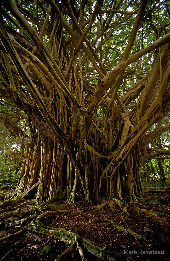 Banyan Tree by Mark Ramstead