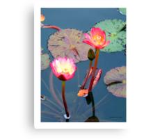 Pond Lillies Canvas Print