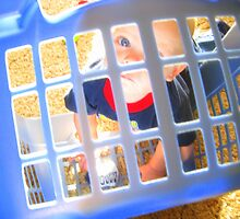 Basketcase by Tina Miller